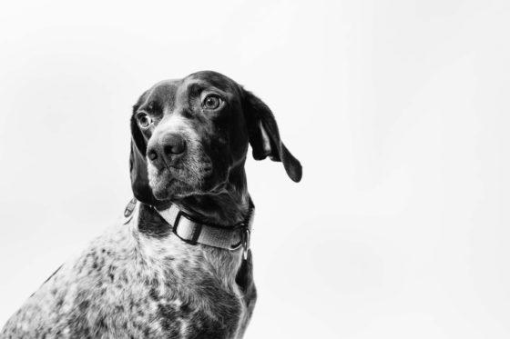 black and white dog photo