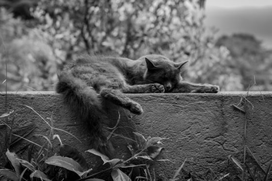 cat on wall