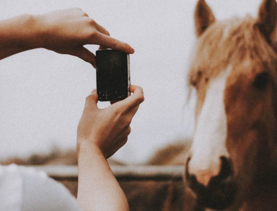 phone and horse