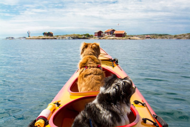 dogs in kayak
