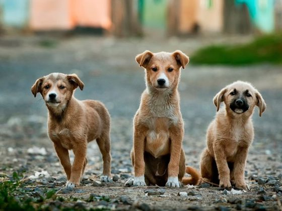 puppies in road