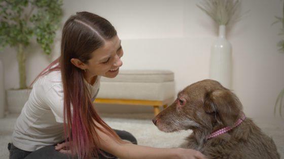 senior dog and rescuer