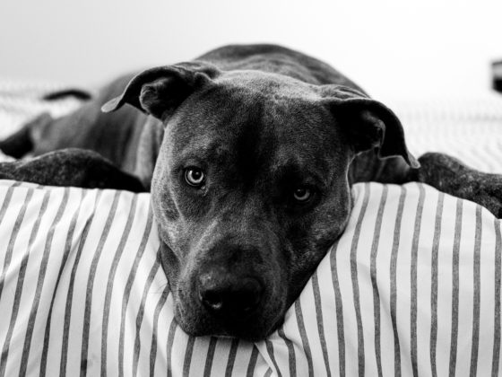 dog on striped bedding