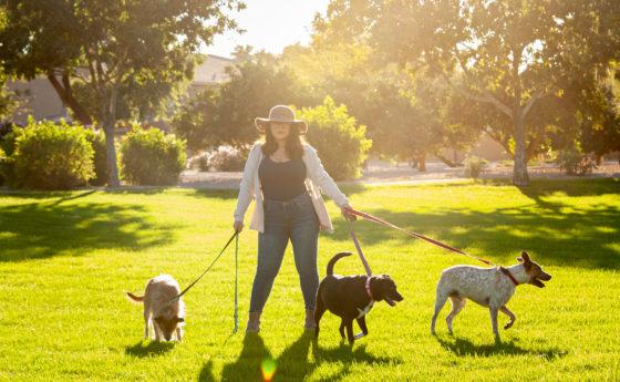 girl in hat walking three dogs