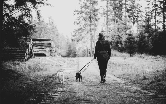 woman walking with dogs in black and white