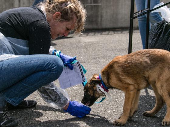 rescuer feeding dog
