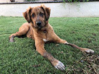 muddy puppy on grass