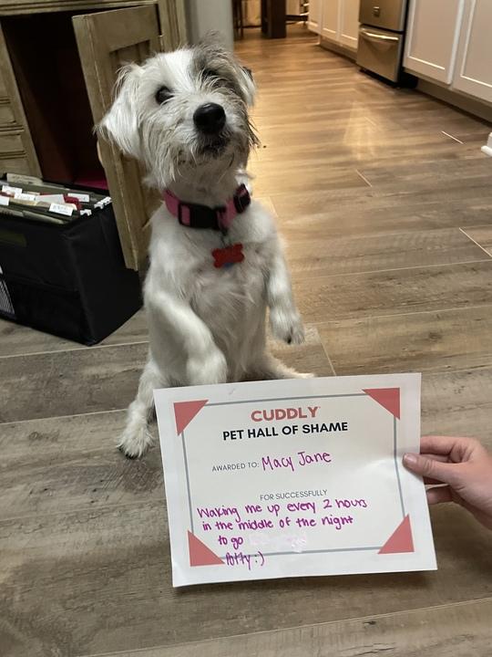 terrier being shamed