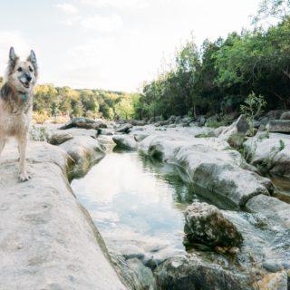 dog at campbell lake