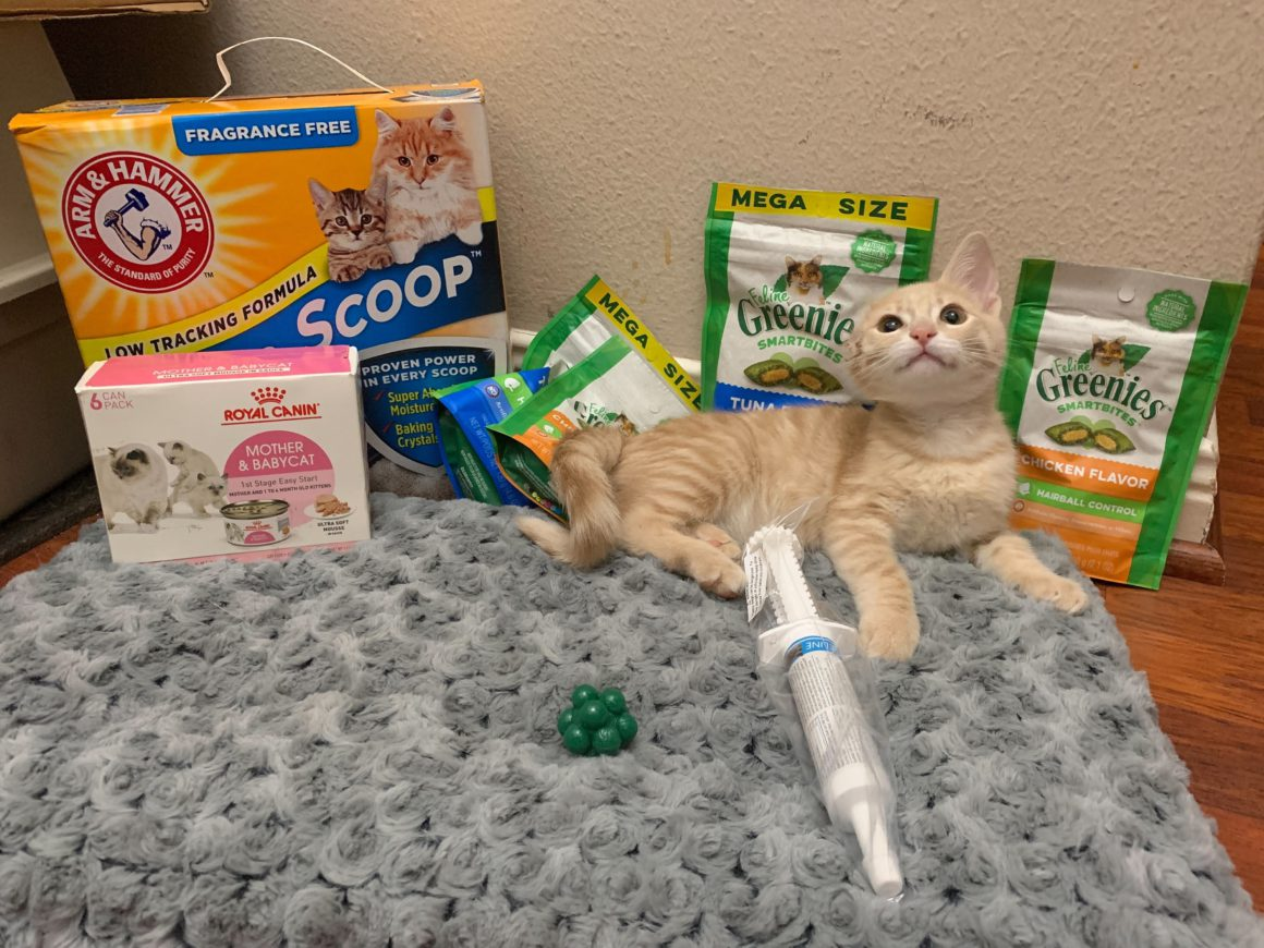kitten with pet products