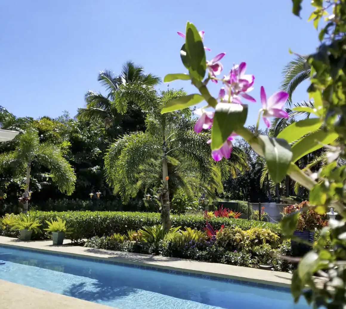 flowers and pool