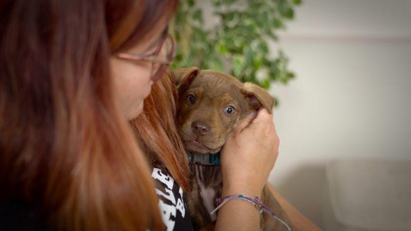 brown puppy cuddling