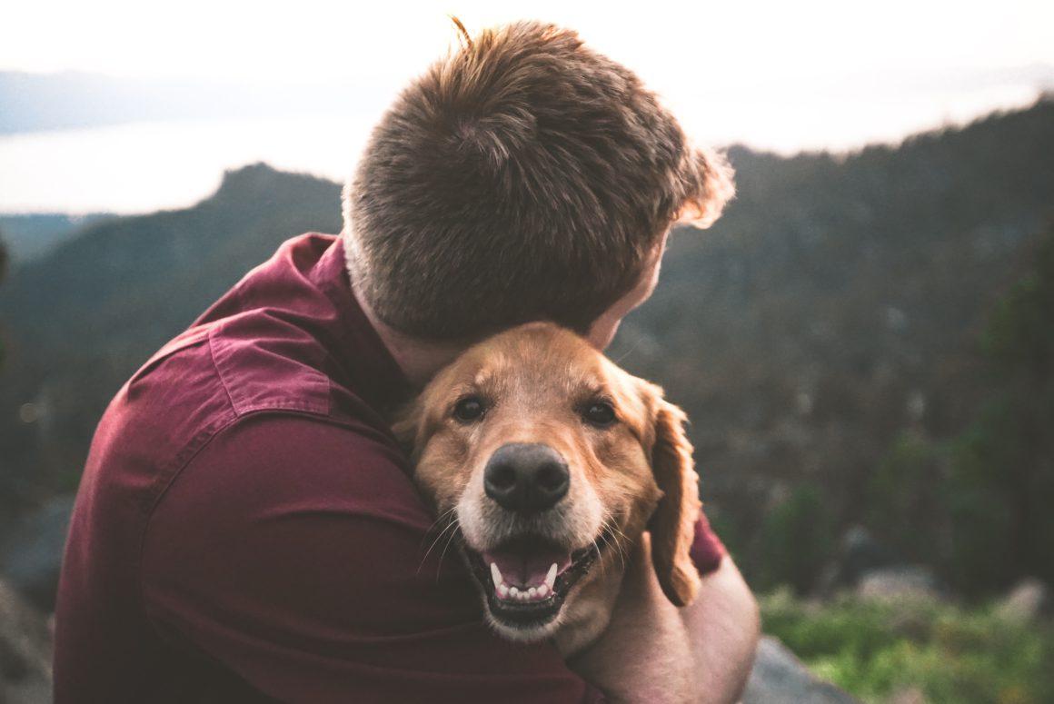 boy and golden dog