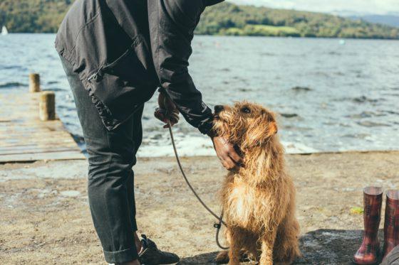 dog and man on beach