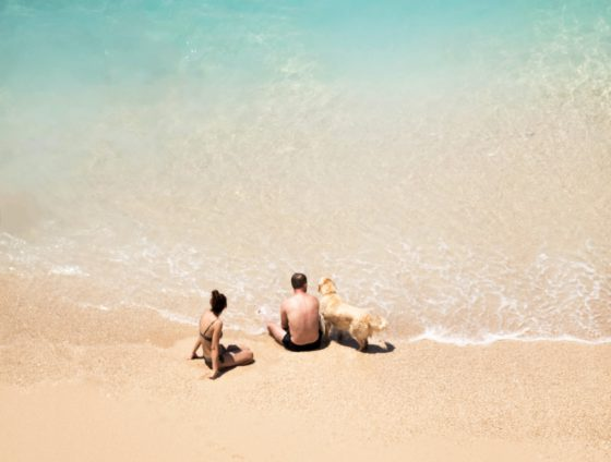 people and dog on beach