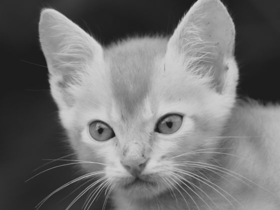 kitten face