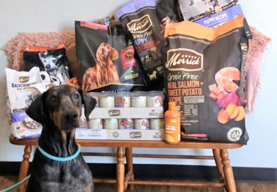 doberman with pet products