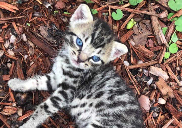 kitten in mulch