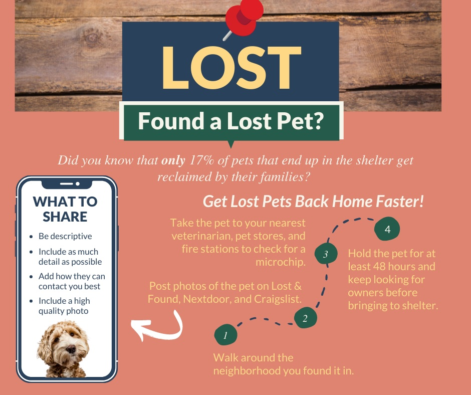 found a lost pet