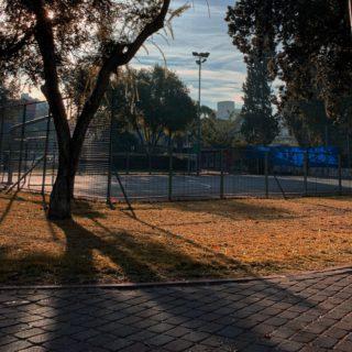 dog alone in park
