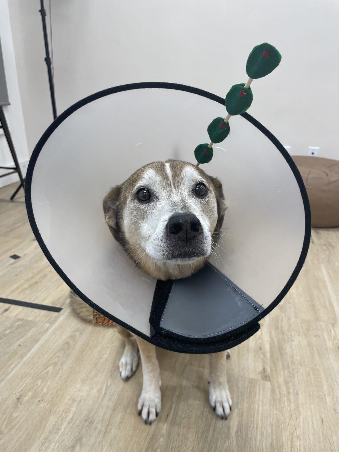 dog martini costume