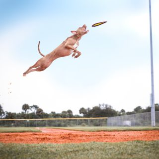 dog flying in air